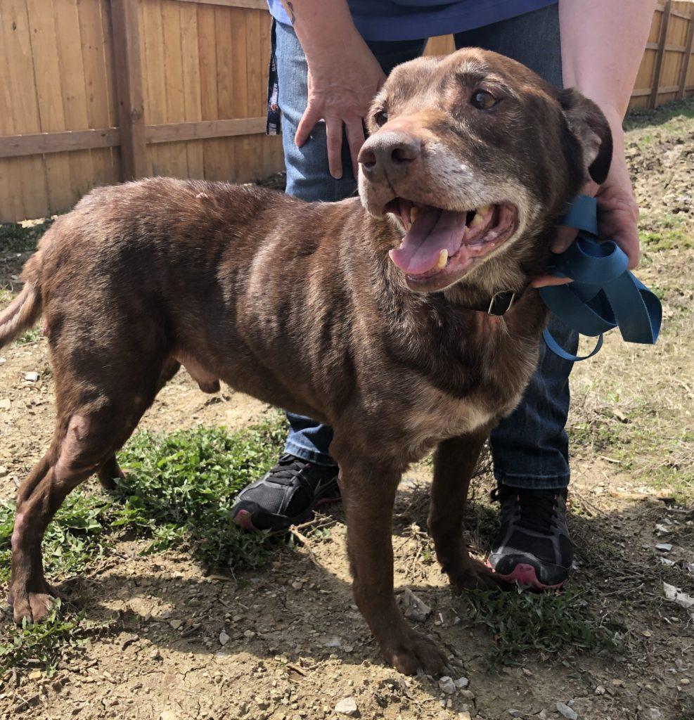 Our Dogs – Shep's Place Senior Dog Sanctuary