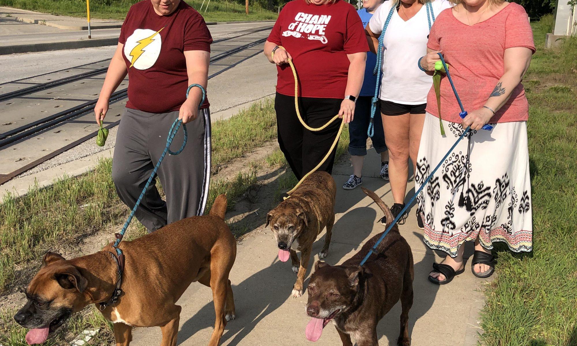 Volunteer – Shep's Place Senior Dog Sanctuary