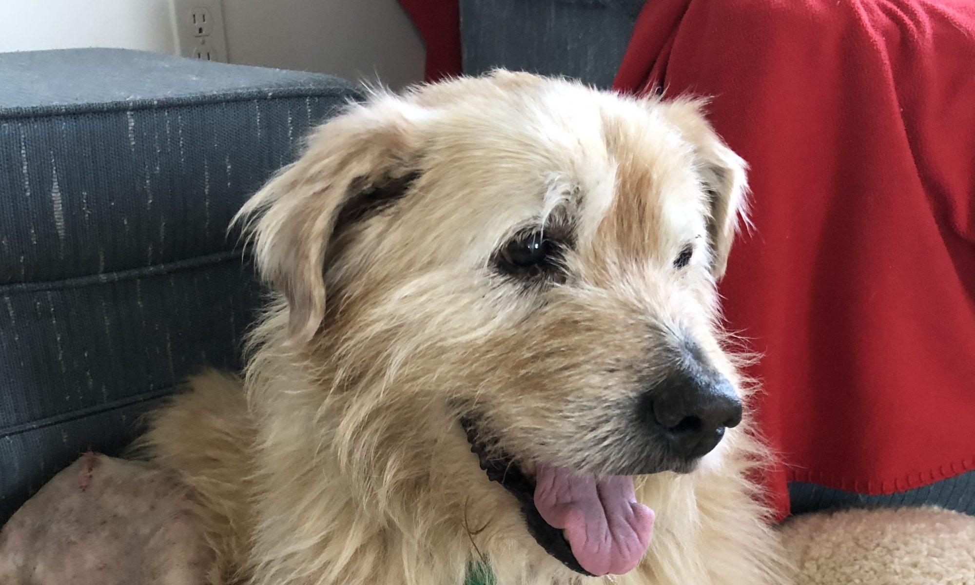 About Us – Shep's Place Senior Dog Sanctuary